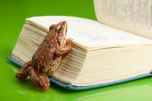 kikker met het boek foto