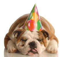 hond met verjaardagsfeestje hoed foto