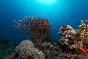 onderwaterlandschap in de rode zee. foto