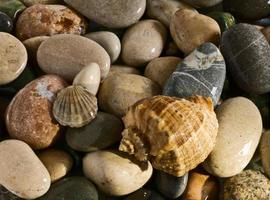 zeeschelp op de rollende stenen