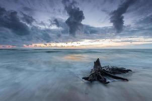 Oostzeekust bij zonsondergang, met verdronken stammen en wortels