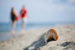 nautilusschelp op het witte strand van Florida foto