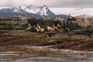 zeehonden en aalscholvers op een eiland, beagle kanaal, argentinië, chili