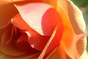 herfst rozentuin in tokyo