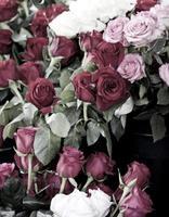 vintage rozen foto