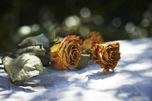 droge rozen