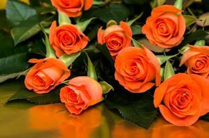oranje rozen foto