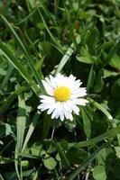 kleine bloem en gras
