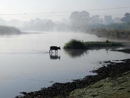 chitwan nationaal park foto