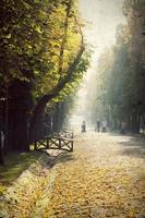 vintage foto van een herfstpark