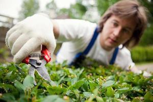 tuinman die een struik snijdt
