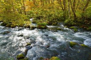 herfst van oirase kloof in aomori, japan foto