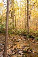 vallen in het bos