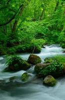 oirase kloof in Aomori, Japan foto