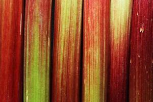 macro-opname van rabarber foto
