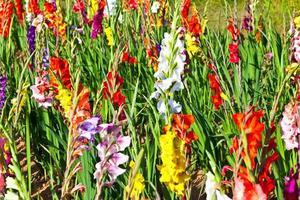 mooie bloemen in de wei