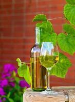 witte wijn in wijngaard foto
