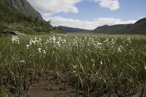 moeras in de vallei van leirungsdalen (nationaal park jotunheimen, vaga,