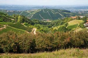 moscato wijngaarden en hazelnootbomen rond neviglie, piemonte foto