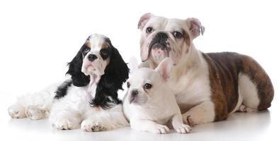 drie puppy's
