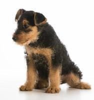 schattige puppy foto