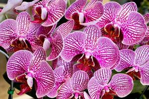prachtige paarse orchidee