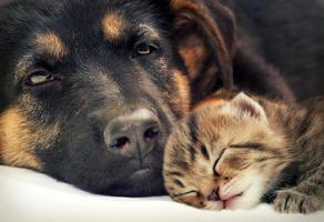 puppy en kitten foto