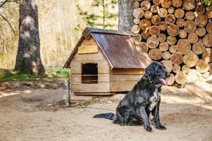 zwarte hond aan ketting foto