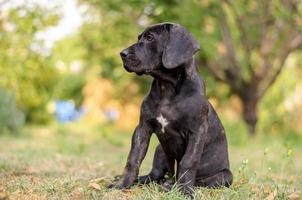 puppy zittend in het gras