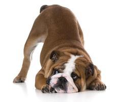 hond buigen