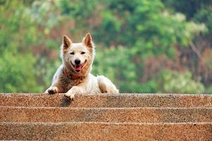 pluizige witte hond