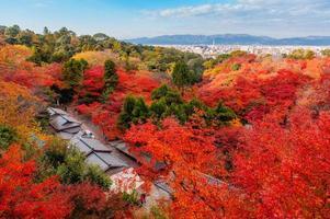 Japanse tuin met herfstkleurige bladeren