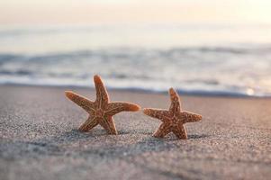twee zeesterren op zonsondergangstrand foto