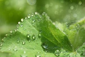 abstact bokeh aard - waterdruppels op blad na regen