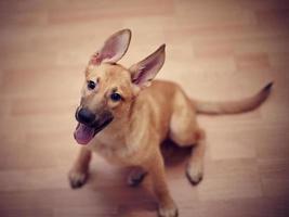 grappige niet-rasechte puppy.