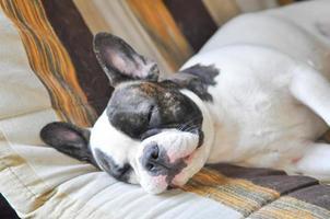 slapende hond foto
