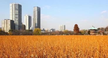 gebouwen van tokyo uit uenopark foto