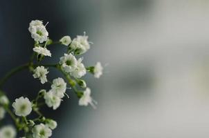 baby's adem bloemen macro links copyspace