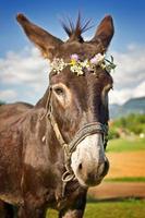 portret van een ezel die een bloemenkrans draagt