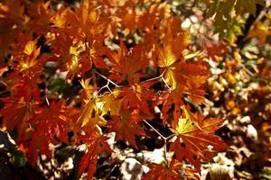 herfstblad foto