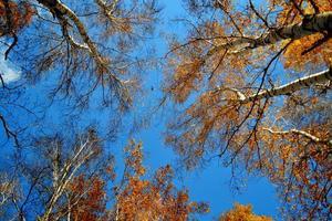 herfst etudes foto