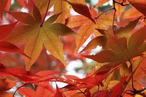 herfstbladeren de herfstbladeren