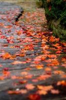 herfst promenade