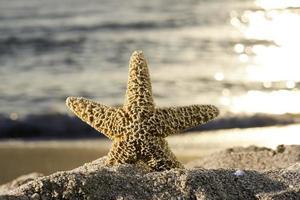 zeesterren en zonsopgang op het strand. foto