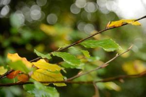 herfst nadert