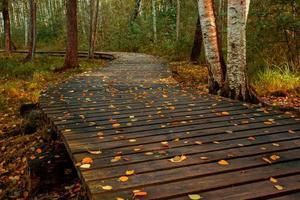 herfst trail