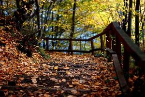 herfst weg foto