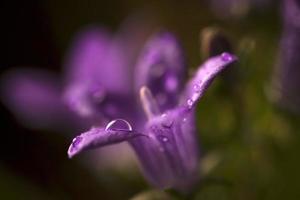 regendruppels op wilde bloemen