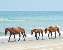 paarden op strand