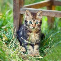 leuk katje verblijft in een hoog gras in de tuin foto